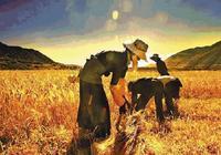 """劉石:""""三農問題""""核心在農業!"""