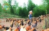 小夥子辭掉年薪20萬的工作,回農村養土雞,家人都說他瘋了!