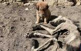 小狗躺在狗媽屍體旁不願離去,走去一打聽,傷心不已