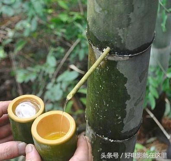 """山村小夥創業賣""""竹子酒"""",280元一節,連馬雲都在喝,值不值?"""