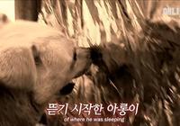 忠犬為拯救主人,目睹自己的孩子被山泥活埋,半年內一直守在原地