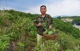 河南偏遠山區靠養殖柞蠶致富,還用柞蠶美食招待客人,你敢吃嗎?