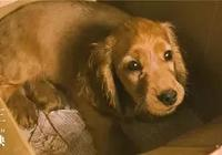 《狗十三》:狗永遠是狗,人有的時候卻不是人。