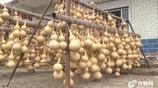 中國葫蘆第一村:村民靠葫蘆致富 一個能賣3000元