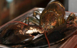 漁民捕到百歲龍蝦,以為是珍寶,專家卻讓漁民趕快吃了