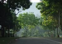 新加坡男子撿榴槤遇毒蜂喪命,妻子12年前被樹砸死
