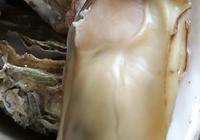 今年的牡蠣特別肥