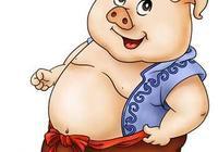 豬豬的命運,你如何看?