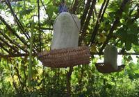 豆瓣日記: 夏日食瓜