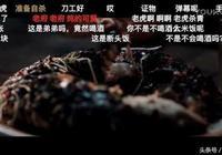 白夜追凶關宏峰為什麼吃了老虎 吃魚的是哥哥還是弟弟