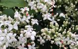 """這4種植物被稱""""慢性毒藥"""",我家既然有3種!第2種多數人都有養"""