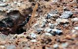 微距鏡頭下的螞蟻搬家