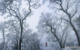 執著,只為留下梵淨山最壯美的景色——攝影家何雄周冰雪作品欣賞