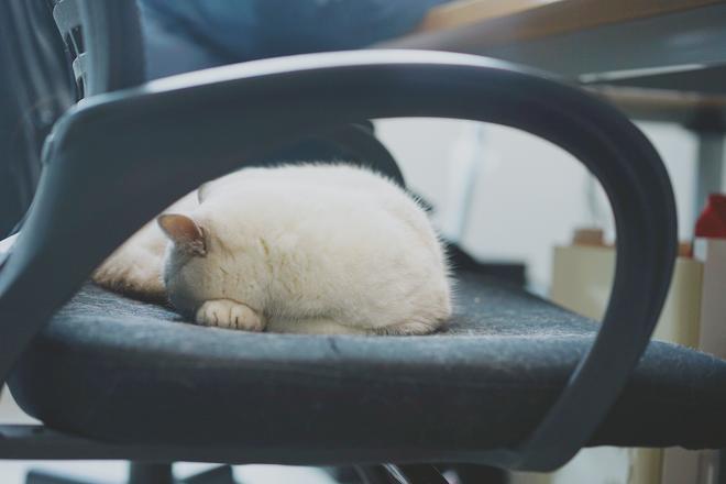 有一種羨慕叫生來是貓,你在努力地工作,它卻在辦公室裡傳著鼾聲