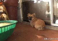 小狗生來就沒了四肢,連上廁所都不能自理,它想要的只是一次奔跑