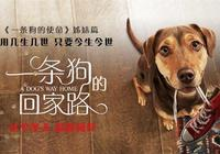 《一條狗的使命2》:大局變小愛,續集這一點輸給了前作!