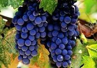 波爾多及優級波爾多葡萄酒亮相TopWineChina2017