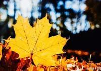 邯鄲秋色——在最炫的季節賞最美的紅葉!