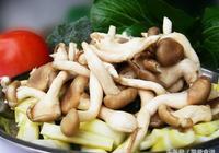 蔬菜水果和菌藻類的營養價值——被你遺忘的菌菇類