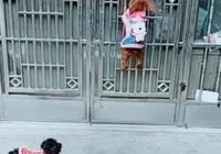 泰迪自己開門回家,邊牧:你倆咋不知道關門呢,網友:這狗成精了