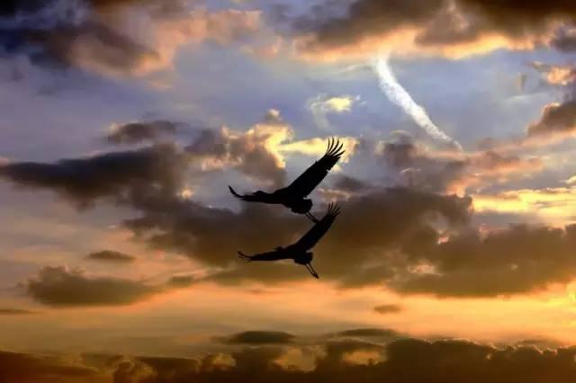 鴻雁來時,無限思量……