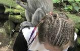 成精了!澳洲一家打卡巴厘島卻被猴子搶鏡 它竟然還會比中指