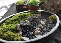 苔蘚造景?還能治空氣汙染?