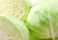 捲心菜的營養價值 常吃捲心菜竟有這奇效