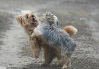 想養多一隻狗狗,又不想狗打架,讓狗狗和平相處用這3招