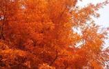 紅楓銀杏美景