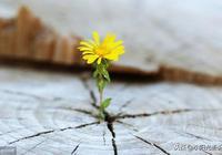 人生積極樂觀的句子,句句經典,選一句送給自己!