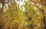 初秋的奧林匹克森林公園
