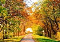 這是我見過,關於秋天最美的詩!