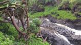 漫遊圖集 美國茂宜島歐赫歐峽谷暢快遊玩 森林茂密景色絕美