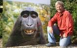 """他因一張""""猴子自拍照""""被告到破產!猴子笑了"""