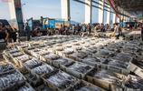 吃貨有福了!這裡的海鮮價格大跳水,黃魚、帶魚只賣10塊一斤