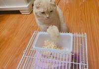貓咪和倉鼠在稱兄道弟,主人一轉身倉鼠成了盤中餐