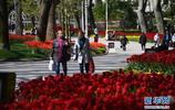 世界園林巡禮——伊斯坦布爾居爾哈內公園