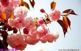 2019之春:陝西銅川人民公園之春 姚忠智 攝影