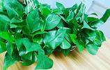 綠蘿只要避開這三點,葉子油綠成倍增長,很快就能爆盆