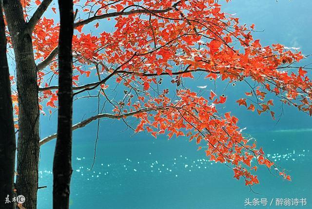 《七絕 · 賞秋》文/華訊