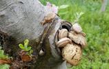 樹上的蝸牛