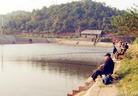 釣魚餌料:針對傳統釣,這兩種餌料不錯