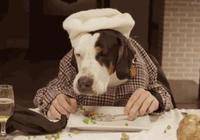 家裡來客人,老爸把狗狗的零食拿出去招待,我至今沒有敢說實話