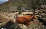 55歲大叔至今不娶,住深山放牛生活滋潤,直呼單身自由