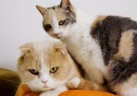 《貓咪後院》的喵演員們——人類可採訪不了他們