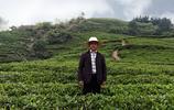 小夥因貧困外出打工48歲逆襲返鄉,包山種茶給村民發60萬