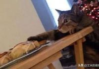 喵星人偷吃東西,被主人發現後,貓表情亮了:我什麼都沒做