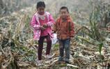 農家娃霧中幫家裡撿玉米,一個8歲一個4歲,姑媽:農家孩子勤快