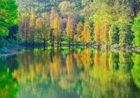 最美廣州——大夫山森林公園,大夫山是不用門票的